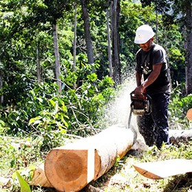 creating jobs and conserving forest in honduras